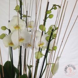 Bouquet rond de fleurs blanches purete La Ronde des Fleurs