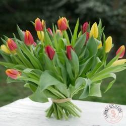 Hauteur Cime La Ronde des Fleurs