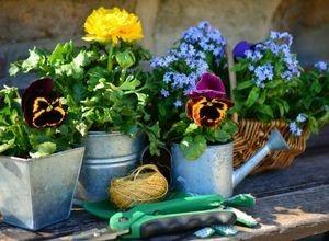 La Ronde des Fleurs : Un large choix d'orchidées
